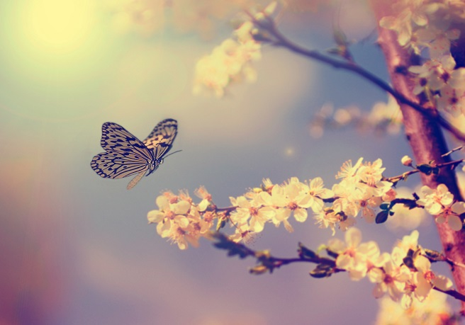 Shutterstock paixão borboletas